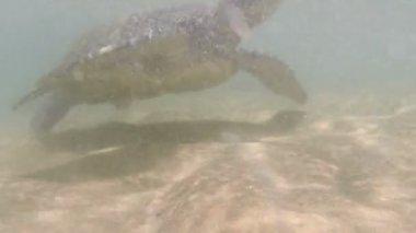 Large sea turtle — Vídeo de stock