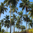 Hut under coconut palms — Stock Photo #73049353