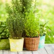 Herb garden — Stock Photo #51807407