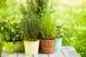 Herb garden — Stock Photo