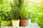 Jardim de ervas — Foto Stock