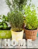 Jardín de hierbas — Foto de Stock