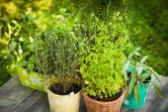 Herb garden — Stock Photo