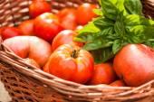 Bauernhof Tomaten — Stockfoto