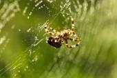 паук в интернете — Стоковое фото