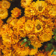 Orange chrysanthemum — Stock Photo #56239313