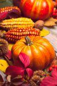 Autumn in a box — Foto de Stock