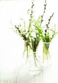 Snowdrops in the bottles — Stock Photo