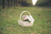 Daisies and teddy bear — Stock Photo