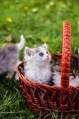Kocięta w koszyku — Zdjęcie stockowe