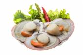 Raw fresh scallop — Stock Photo