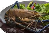 Freshwater prawn — Stock Photo