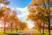 Road curves through autumn trees  — Stock Photo