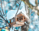 Sparrow in a manger — Stock Photo