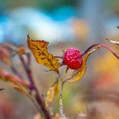 Foto in primo piano dei fogli di autunno — Foto Stock
