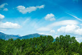 Pyrenees Meadow in summer day — Stock Photo