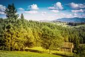 Summer day in Carpathian mountain — Stock Photo