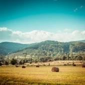 Hay bail harvesting — Stock Photo