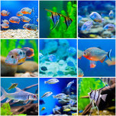 Blue saltwater world in aquarium — Stock Photo