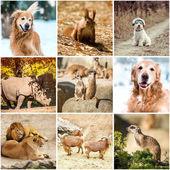 Animals in nature — Stock Photo
