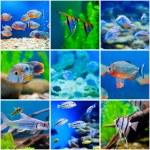 Blue saltwater world in aquarium — Stock Photo #67884605