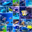 Colorful fish in aquarium saltwater world — Stock Photo #69745739