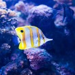 Colorful fish in aquarium — Stock Photo #69746477