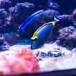 Colorful fish in aquarium — Stock Photo #69746547