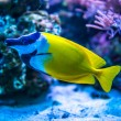 Colorful fish in aquarium — Stock Photo #69747117