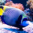 Colorful fish in aquarium — Stock Photo #69747363