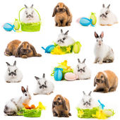 Rabbits and  Easter eggs in a basket — Stock Photo