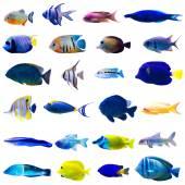 Tropical fish set — Stock Photo