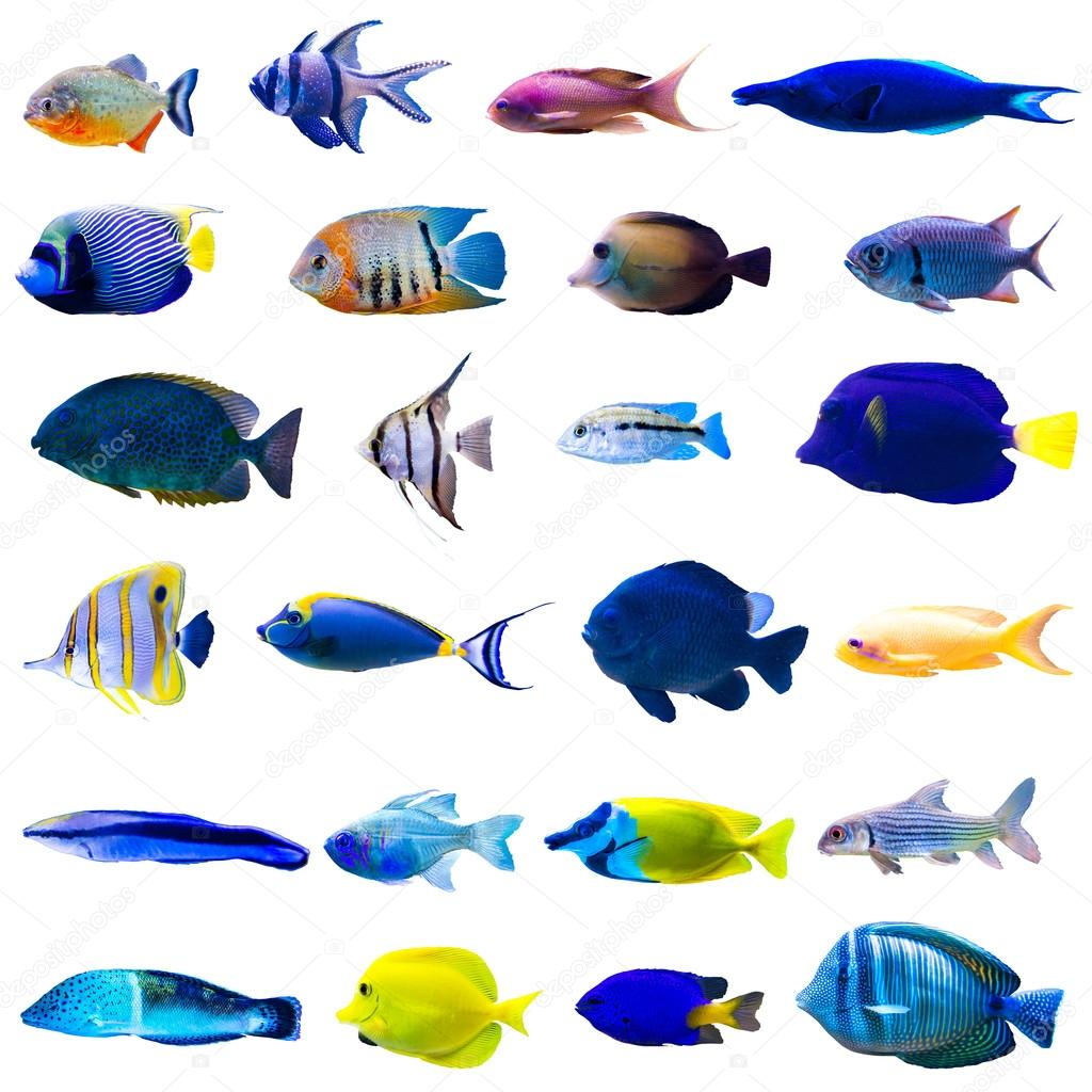 Conjunto de peces tropicales foto de stock tan4ikk for Peces tropicales