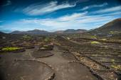 Vineyards in  La Geria — Stock Photo