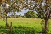 Rowan trees on meadow — Stock Photo