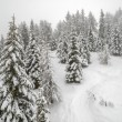 Mist in winter mountain forest — Stock Photo #58204787