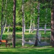 Relax place near pond in summer park — Stock Photo #65807207