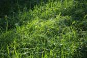 Green grass and sunlight — Stock Photo