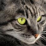 Ritratto di gatto-eyed — Foto Stock #61726637