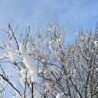 Branches of winter trees covered with snow — Stock Photo #69658365
