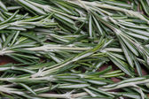 Sprigs of rosemary — Stock Photo