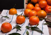 Brunch of tangerines — Stock Photo