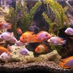 Aquarium with fishes — Stock Photo #56225943