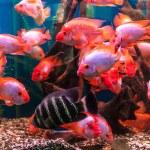 Aquarium with fishes — Stock Photo #56225993