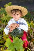 Abóbora de exploração de menino — Fotografia Stock