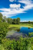 Summer morning lake — Stock Photo