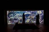 Huge aquarium in Dubai — Stock Photo