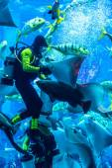 Huge aquarium in Dubai. — Stock Photo