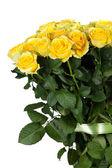 φρέσκα κίτρινα τριαντάφυλλα — Φωτογραφία Αρχείου