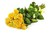 Fresh yellow roses — Stock Photo